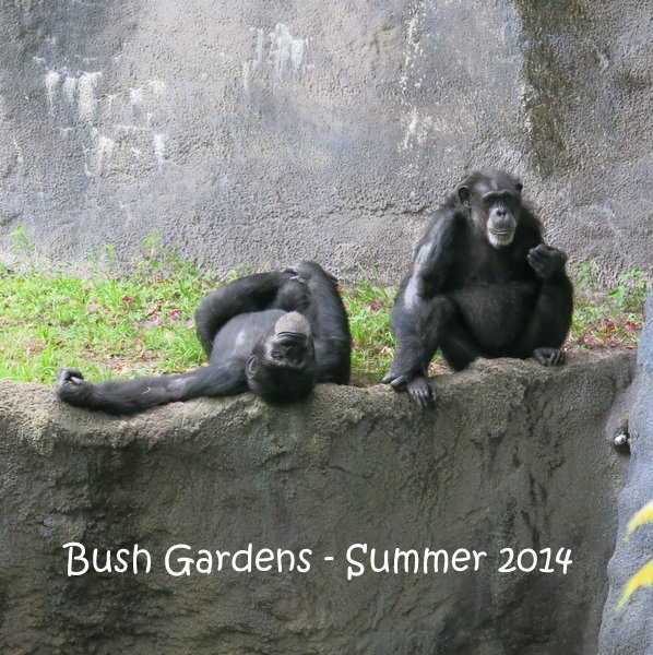 Chimpanzees at Busch Gardens, Tampa, Florida