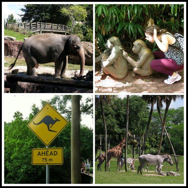 Animals at Busch Gardens Tampa Florida